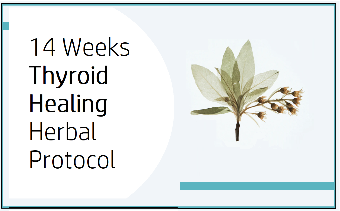 14 WEEKS THYROID HEALING HERBAL PROTOCOL guiding