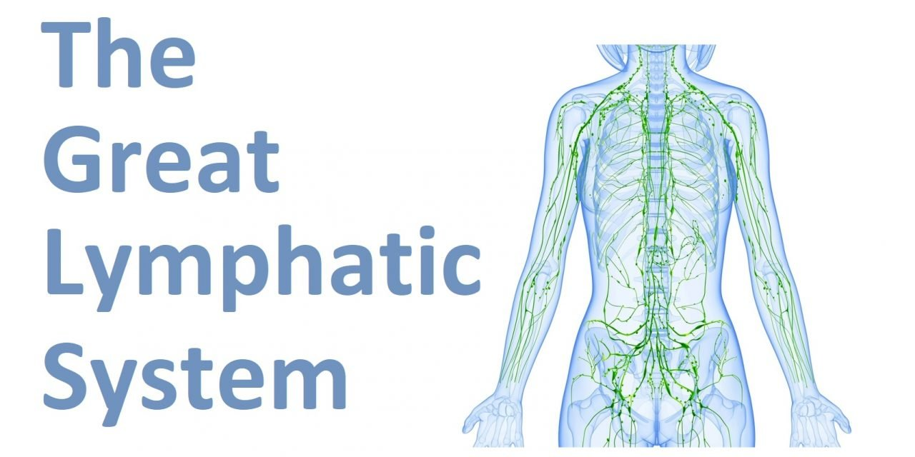 The Great Lymphatic system