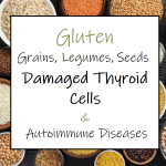 Gluten, Grains, Legumes, Seeds – Damaged Thyroid Cells & Autoimmune Diseases